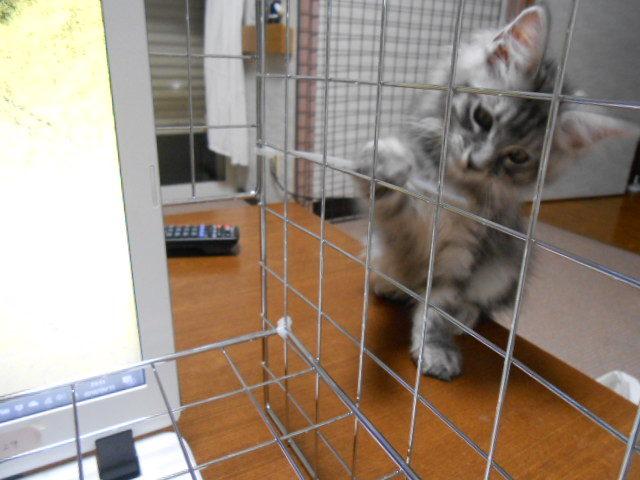 パソコン猫除け