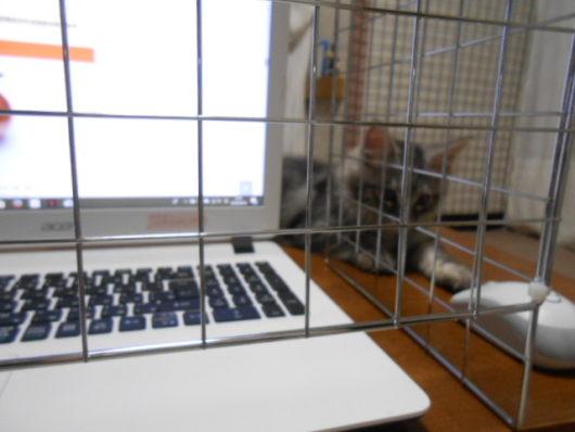 パソコン猫ガード