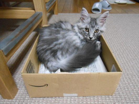 子猫と段ボール箱