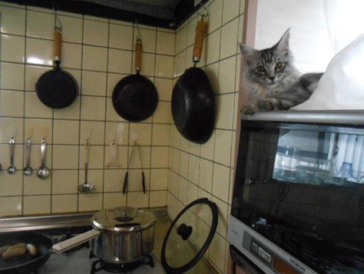 猫 電子レンジの上