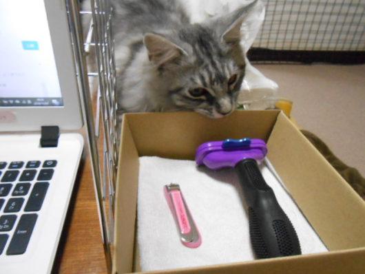 猫のお手入れ用品