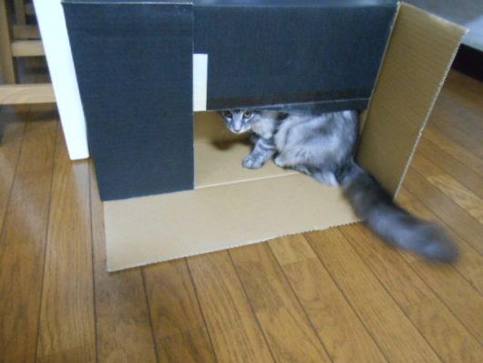 猫に段ボール箱