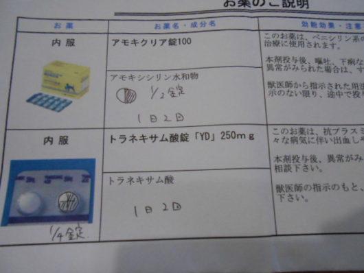 猫 細菌性膀胱炎 処方薬
